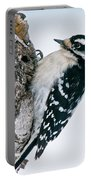 Downy Woodpecker Pictures 27 Portable Battery Charger
