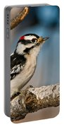 Downy Woodpecker Pictures 34 Portable Battery Charger