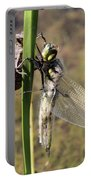 Dragonfly Newly Emerged - Second In Series Portable Battery Charger