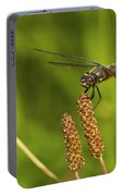 Dragonfly On Seed Pod 2 Portable Battery Charger