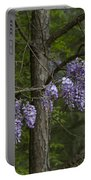 Draping Wisteria Frutescens Wildflower Vines Portable Battery Charger