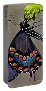 Eastern Black Swallowtail Portable Battery Charger