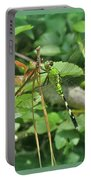 Eastern Pondhawk Female Dragonfly - Erythemis Simplicicollis - On Pine Needles Portable Battery Charger