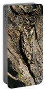 Eastern Screech-owl Otis Asio Wild Texas Portable Battery Charger