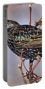 Common Starling Portable Battery Charger