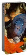 Eel And Starfish Portable Battery Charger