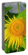 Elecampane Daisies Portable Battery Charger