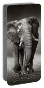 Elephant Approach From The Front Portable Battery Charger