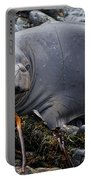 Elephant Seal Of Ano Nuevo State Reserve Portable Battery Charger