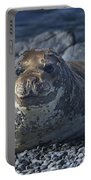 Elephant Seal Pup... Portable Battery Charger