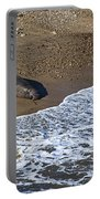 Elephant Seal Sunning On Beach Portable Battery Charger