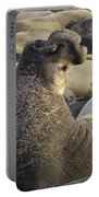 Elephant Seals Portable Battery Charger by Bob Christopher