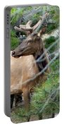 Elk In Rocky Mountain National Park Portable Battery Charger