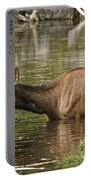 Elk Pictures 36 Portable Battery Charger