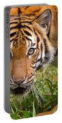Endangered Species Sumatran Tiger Portable Battery Charger