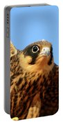 Eurasian Hobby Falco Subbuteo In Portable Battery Charger