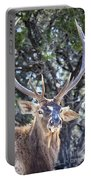European Red Deer Portable Battery Charger