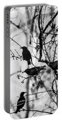 European Starlings Portable Battery Charger