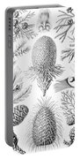 Examples Of Coniferae From Kunstformen Portable Battery Charger by Ernst Haeckel