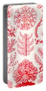 Examples Of Florideae From Kunstformen Der Natur Portable Battery Charger by Ernst Haeckel