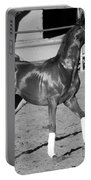 Exercising Horse Bw Portable Battery Charger