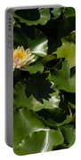 Exotic Colored Waterlilies In The Hot Mediterranean Sun Portable Battery Charger