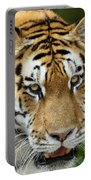 Eyes Of The Tiger Portable Battery Charger