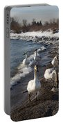 Family Walk On The Beach - Wild Trumpeter Swans Lake Ontario Toronto Portable Battery Charger