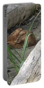 Fawn Resting On Beach Portable Battery Charger