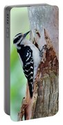 Female Downy Woodpecker Portable Battery Charger
