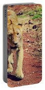 Female Lion Walking. Ngorongoro In Tanzania Portable Battery Charger