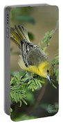 Female Orchard Oriole Portable Battery Charger
