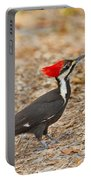 Female Pileated Woodpecker Portable Battery Charger