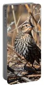 Female Red-winged Blackbird Portable Battery Charger