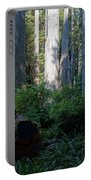 Ferns Of The Redwood Forest Portable Battery Charger