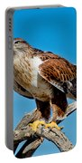 Ferruginous Hawk About To Take Portable Battery Charger