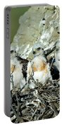 Ferruginous Hawk Chicks In Nest Portable Battery Charger