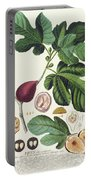 Fig Engraved By Johann Jakob Haid  Portable Battery Charger