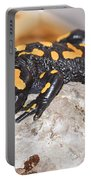 Fire Salamander Salamandra Salamandra Portable Battery Charger