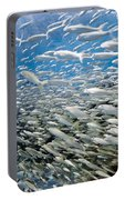 Fish Freeway Portable Battery Charger