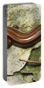Five-lined Skink Portable Battery Charger