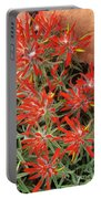 Flaming Zion Paintbrush Wildflowers Portable Battery Charger