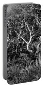 Florida Scrub Oaks Painted Bw  Portable Battery Charger