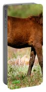 Florida Spanish Horse Portable Battery Charger