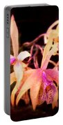 Flower - Orchid - Laelia - Midnight Passion Portable Battery Charger by Mike Savad