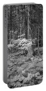 Forest Floor Glacier National Park Bw Portable Battery Charger