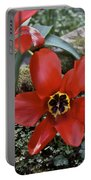 Fosteriana Tulips Red Emperors Portable Battery Charger