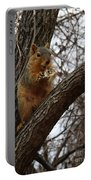 Fox Squirrel 1 Portable Battery Charger