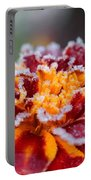 French Marigold Named Durango Red Outlined With Frost Portable Battery Charger