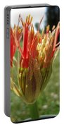 From Bud To Bloom - African Blood Lily Portable Battery Charger